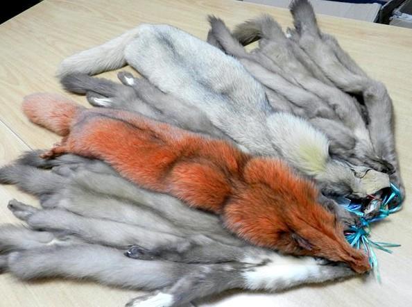 Покраска меховых изделий в домашних условиях меховой